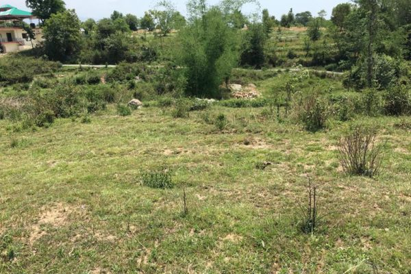 235 Kanal Land for Sale Shahpur Kangra H.P.