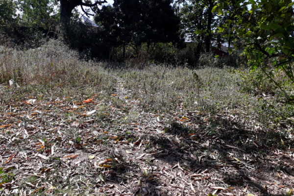 6 Kanal Land for Sale in Rehlu (Shahpur)