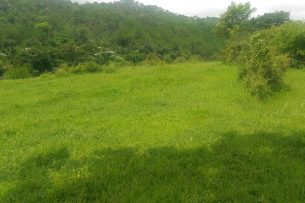 Residential Plot in charri Near Dharamshala